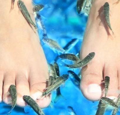 fiskpediny